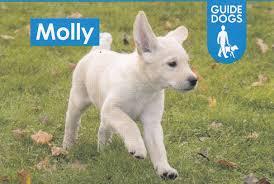 CDS Sponsors Guide Dogs UK